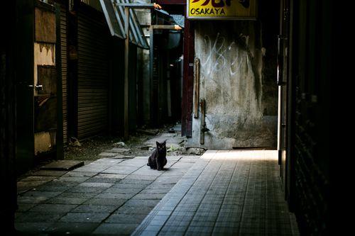 ネコの不思議な能力!「人間の死」「自分の死」「天気&地震予知」猫を紹介!