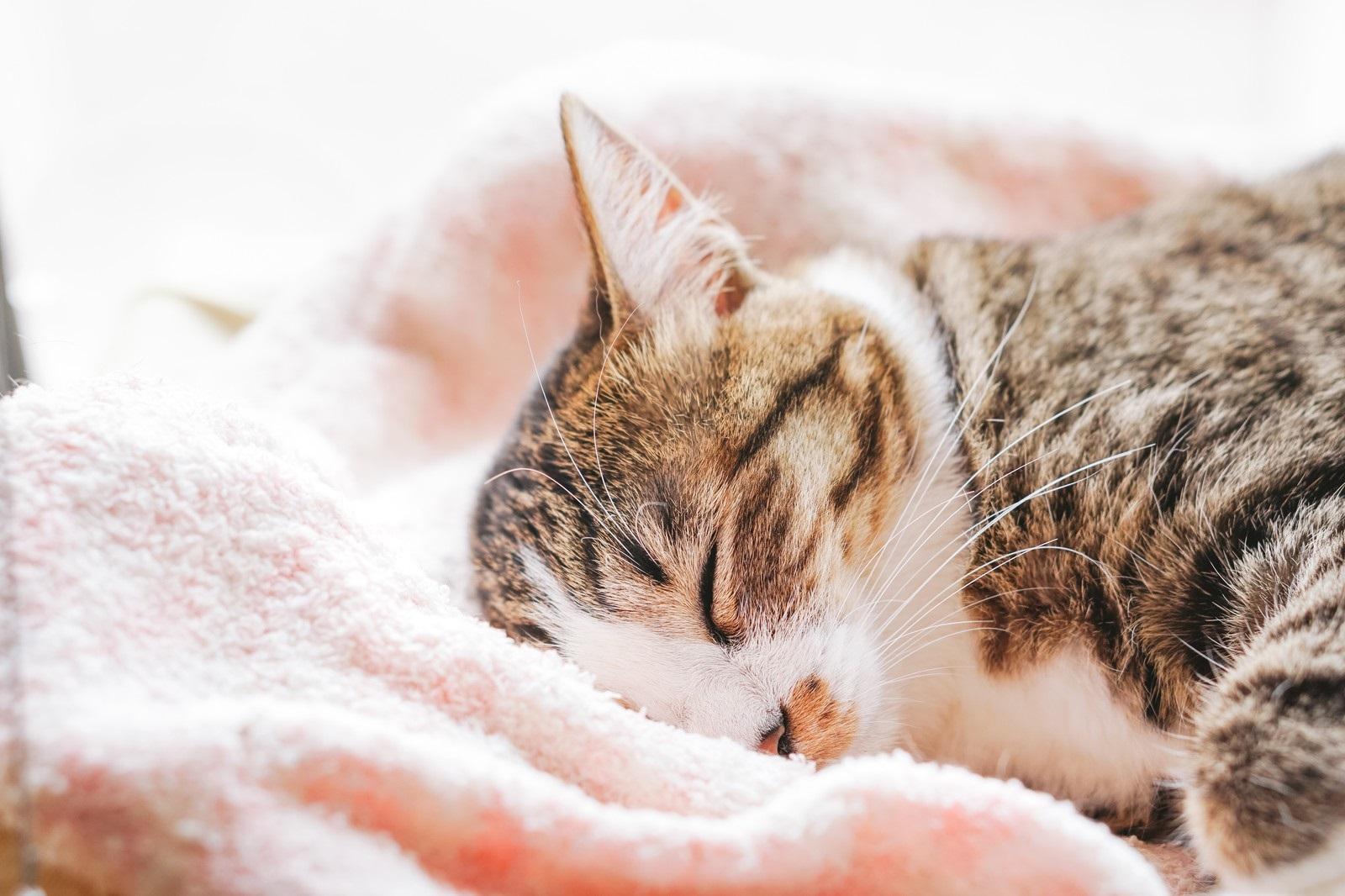 ネコはシャンプーが必要?どのくらいの頻度?猫のトリミングサロン利用の危険性は?